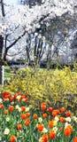 Wiosna kwiaty i kwiatonośni drzewa zdjęcia royalty free