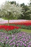 Wiosna kwiaty i owocowy drzewo Fotografia Stock