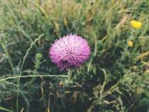 Wiosna kwiaty i zielona trawa w Tbilisi Zamyka w górę strzału Zdjęcie Stock