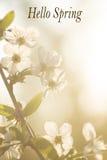 Wiosna, kwiaty, kwiat, płatki, owocowi drzewa, natura, raca Fotografia Stock