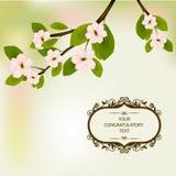 Wiosna kwiaty kwitnący na drzewie Zdjęcia Stock