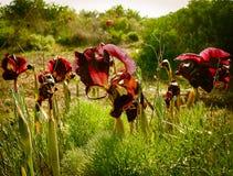 Wiosna kwiaty Kwitnie w Poleg Leją się blisko Śródziemnomorskiego s Obrazy Royalty Free