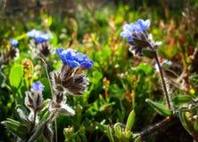 Wiosna kwiaty Kwitnie w Poleg Leją się blisko Śródziemnomorskiego s Fotografia Stock