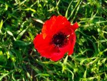 Wiosna kwiaty Kwitnie w Poleg Leją się blisko Śródziemnomorskiego s Fotografia Royalty Free