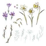 Wiosna kwiaty ustawiający z narcyzem i krokusem ilustracja wektor