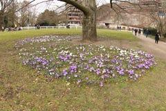 Wiosna kwiaty w Karlovy Zmieniają zdjęcia royalty free