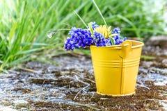 Wiosna Kwietnia świeżość zdjęcia stock