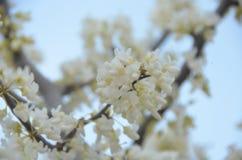 wiosna kwitnąca fotografia royalty free