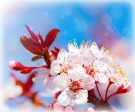 wiosna kwitnący drzewo Fotografia Royalty Free