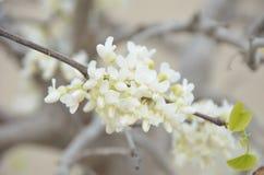 wiosna kwitnąca Zdjęcie Royalty Free
