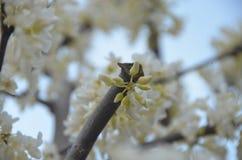wiosna kwitnąca Zdjęcia Stock