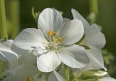Wiosna, kwitnie Obraz Stock