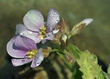 Wiosna, kwitnie Fotografia Stock