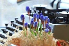 Wiosna kwitnie blisko maszyna do pisania Fotografia Stock