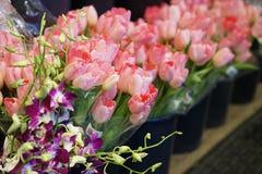 Wiosna kwitnie dla sprzedaży Fotografia Stock