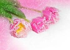 Wiosna kwitnie dla walentynki Fotografia Royalty Free