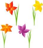 Wiosna Kwitnie ilustracje, Daffodil ilustracje Zdjęcia Stock