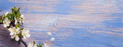 Wiosna Kwitnie na błękitnym tle stara rocznika błękita deska obrazy royalty free