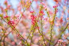 Wiosna Kwitnie Na drzewie zdjęcia royalty free