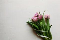 Wiosna kwitnie tulipan kobiet kobiet ` s dzień Zdjęcie Stock