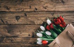 Wiosna kwitnie tulipanu Fotografia Royalty Free