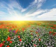Wiosna kwitnie w łące zdjęcia royalty free