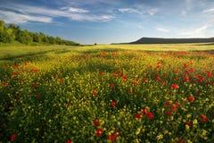 Wiosna kwitnie w łące zdjęcie royalty free