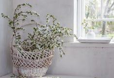 Wiosna kwitnie w białym wnętrzu Zdjęcia Royalty Free