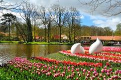 Wiosna kwitnie w Keukenhof parku Obraz Royalty Free