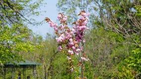 wiosna kwitnie w miasto parku zdjęcia stock