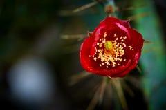 Wiosna kwitnie w parku Zdjęcia Stock