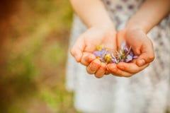 Wiosna Kwitnie w rękach Fotografia Stock