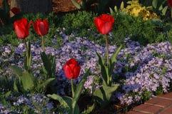 Wiosna Kwitnie Waszyngtońskiego d C Obrazy Stock