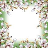 Wiosna, kwitnie wierzby, akwarela Fotografia Royalty Free