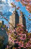 Wiosna kwitnie z miastowym tłem fotografia royalty free