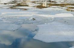 Wiosna lód na stawie w Marzec Zdjęcie Stock