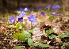 ' wiosna lasów zdjęcie royalty free
