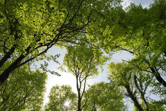 wiosna las Obrazy Stock