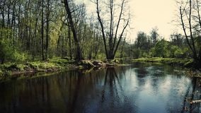 Wiosna las bez liści nad rzeką zbiory