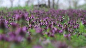 Wiosna las kwitnie w łące zbiory