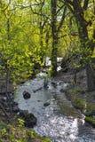 Wiosna las, lasowy burzowy strumień, czysta natura Obrazy Royalty Free