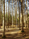 Wiosna las w świetle słonecznym Zdjęcie Royalty Free