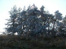Wiosna las w ranku w Krymskich górach obrazy stock