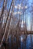wiosna lasowa woda Fotografia Stock