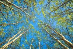 Wiosna lasowy baldachim Zdjęcia Royalty Free
