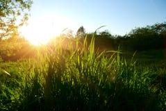 wiosna lasowy zmierzch fotografia royalty free