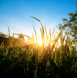 wiosna lasowy zmierzch Zdjęcia Royalty Free