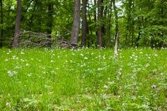 Wiosna lasu dywan Zdjęcie Royalty Free