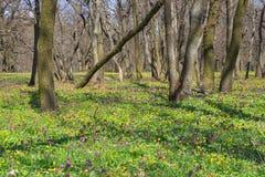 Wiosna lasu krajobraz Zdjęcie Royalty Free