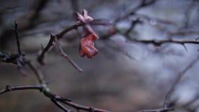 Wiosna lasu krople zbiory wideo